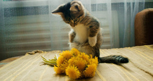 Фотоконкурс - кот из Первомайского района