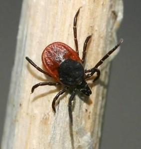 Источник фото - entomologs.ru