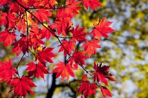 autumn-2789234_1920
