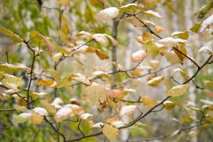 autumn-2811953_960_720