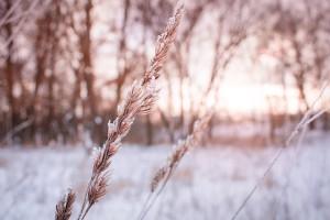 winter-3098272_960_720
