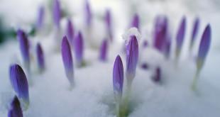 flower-3161201_960_720