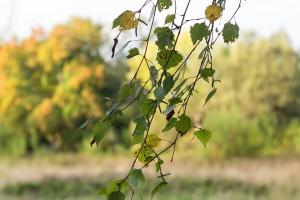 leaves-1705185_960_720