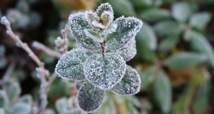 the-first-frost-2751405_960_720
