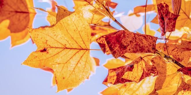 autumn-3763897_960_720