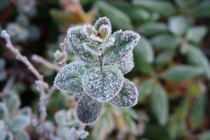 the-first-frost-2751405_640