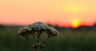 sunset-2548626_640