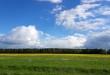 природа весна ясно поле луг облака погода одуванчики