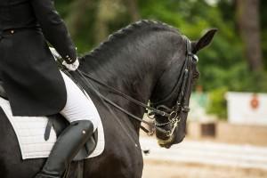 horse-3168576_1280
