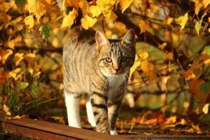 cat-1033706_960_720