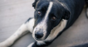 dog-2432579_960_720